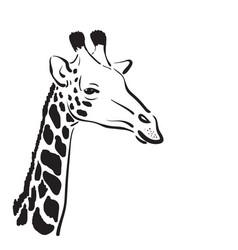 Giraffe head on white background wild animals vector