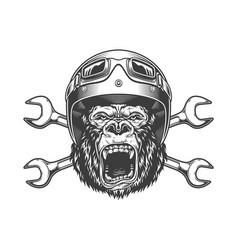 Ferocious gorilla head in moto helmet vector