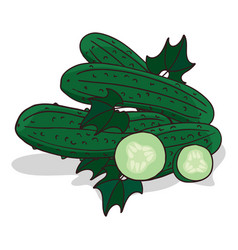 isolate cucumber vegetable vector image