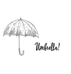 Opened umbrella contoured vector