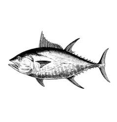 Tuna bluefin fish collection vector