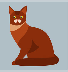 cat breed abyssinian cute pet portrait fluffy red vector image