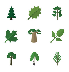 Flat icon ecology set of oaken park baobab and vector