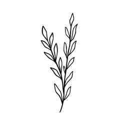Wildflower outline hand drawn element herbs vector