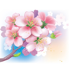 flowers of sakura vector image