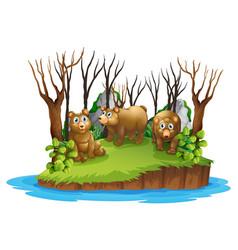 Bear on isolated island vector