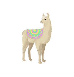 Llama alpaca animal in ornamented poncho vector