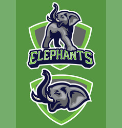 sport mascot elephant vector image vector image