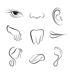 set of icons Human body parts vector image