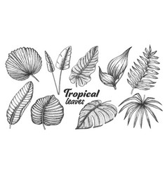 collection different tropical leaves set vector image
