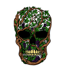 hand drawn human skull made from grapevine design vector image