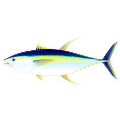 Yellowfin tuna fish vector