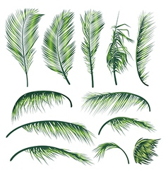 Palm tree leaves vector