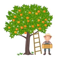 Boy picking oranges vector