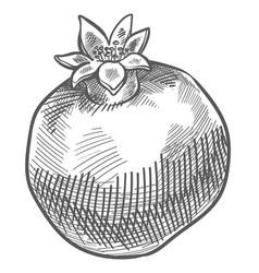 Pomegranate tasty food monochrome sketch outline vector