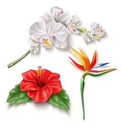 realistic tropical flower 3d hibiscus orhid vector image