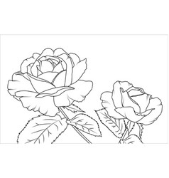 rose flowers draft sketch outline hand drawing vector image