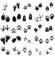 silhouettes animal birds and mammals footprints vector image