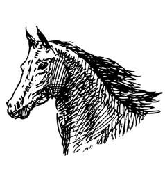 Sketch a head galloping horse vector