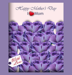 violet purple roses in a gift box realistic vector image