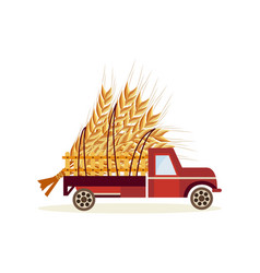 Agricultural harvest concept with big wheat ears vector