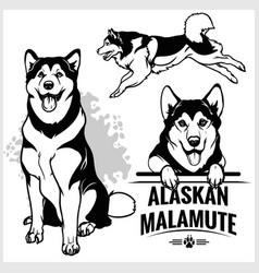 alaskan malamute dog - set isolated vector image