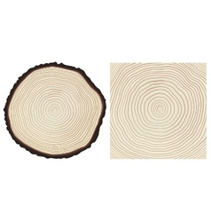 Colour saw cut pine tree trunk and tree rings vector image