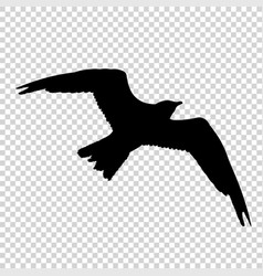 Detailed bird black silhouette isolated vector