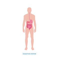 Human digestive system - medical diagram vector