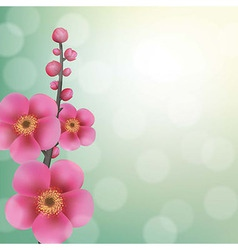 Sakura Flowers With Bokeh vector image