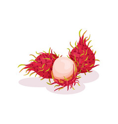two whole and one half-peeled rambutan exotic vector image