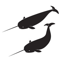 narwhal vector image vector image