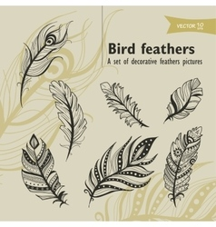 Bird fethers vector