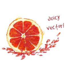 Drawing slice of grapefruit vector