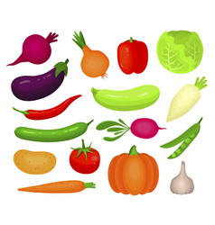 fresh autumn vegetables flat vector image