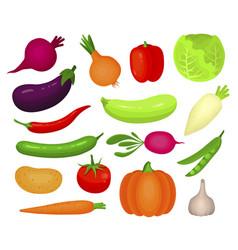 Fresh autumn vegetables flat vector