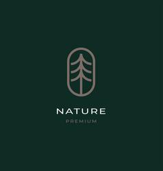 pine tree logo design vector image