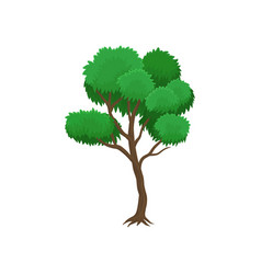 summer tree on a white vector image