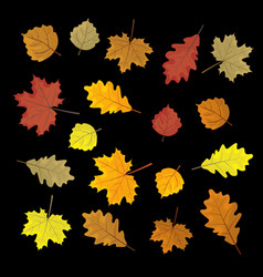 set of colorful autumn leaves design elements vector image