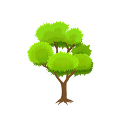spring season tree with green leaves vector image