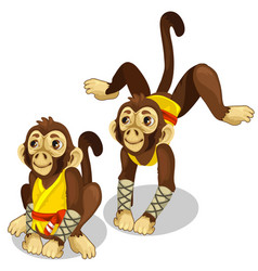two monkeys in a karate costume animals vector image vector image