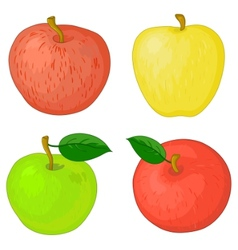 fruits apples vector image vector image