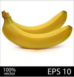 Two bananas in batch vector