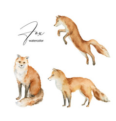 watercolor set fox isolated on a white vector image