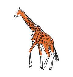 giraffe hand drawn isolated icon vector image vector image