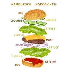 Hamburger ingredients set vector image