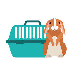 cute rabbit and pet cage vector image