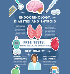 Poster for endocrinology medicine vector