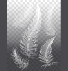 White feathers set of graphic design elements vector