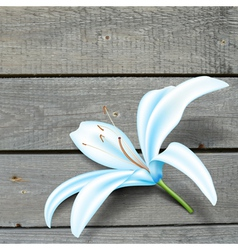 Realistic Blue Lily Flower vector image